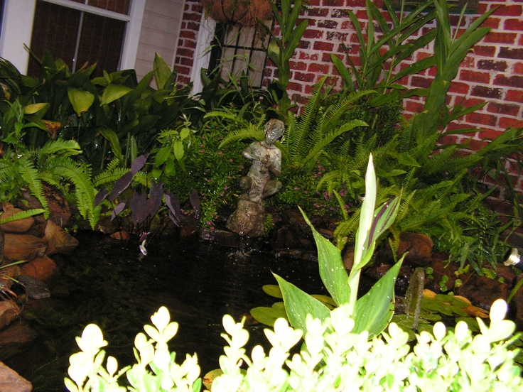 1000 images about goldfish pond ideas on pinterest for Small goldfish pond