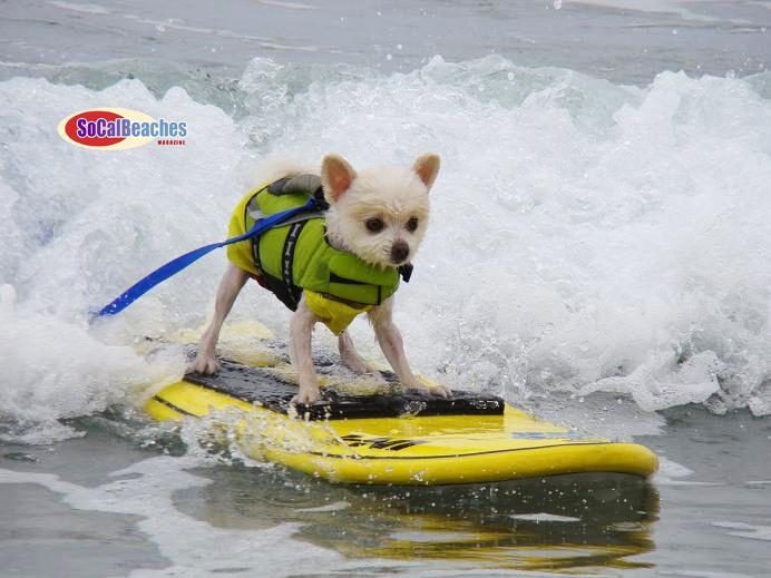 1000 ideas about dog beach on pinterest dog park  dog beach cottage scotland dog friendly dog friendly beach cottages uk