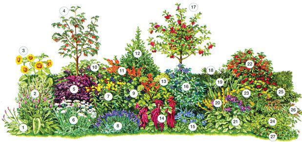 Rostliny, jež poskytují ptákům útočiště i potravu