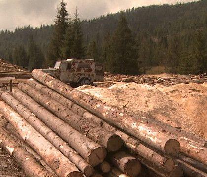 Marea defrisare, partea 3. Cum functioneaza mafia lemnului. Silvicultorii si-au dat mana cu politicienii si impreuna au distrus padurile Rom...
