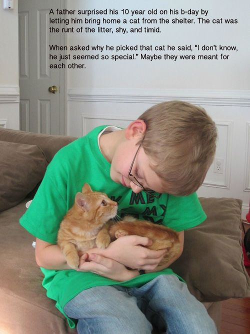 Best A Boy And His Cat Images On Pinterest My Life - 13 year old shelter cat finally got adopted and now only falls asleep if his human holds his paw