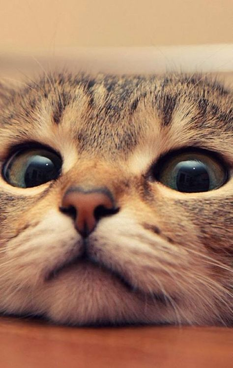 Cats are the most wonderful and interesting creatures in the world, look at those eyes :))