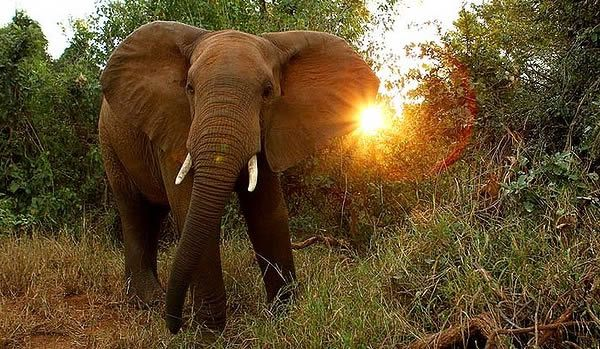 The man trampled to death by an elephant during Kenyan honeymoon safari