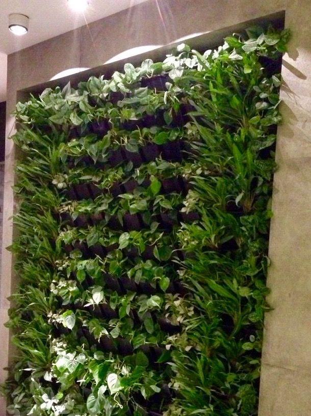 Вертикальное озеленение в нише.