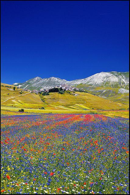 ~~Castelluccio ~ field of poppies, Umbria, Italy by zio.paperino~~province of Perugia