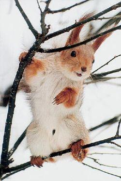 Cute squirrel!
