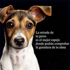 La mirada de un perro es el mejor espejo donde podrás comprobar la grandeza de tu alma