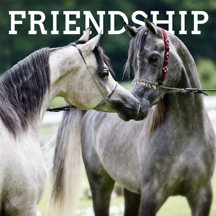 Global Views Horse: 31 Best Images About Horse Quotes On Pinterest