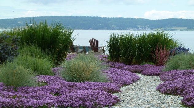 Thymus grass and gravel garden pinterest gardens for Using grasses in garden design
