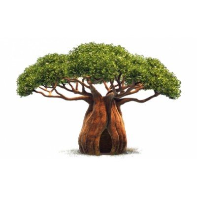 baobab / www.lepetitbaobab. com