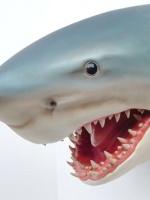 Shark Head dierenbeelden/animals haaienkop