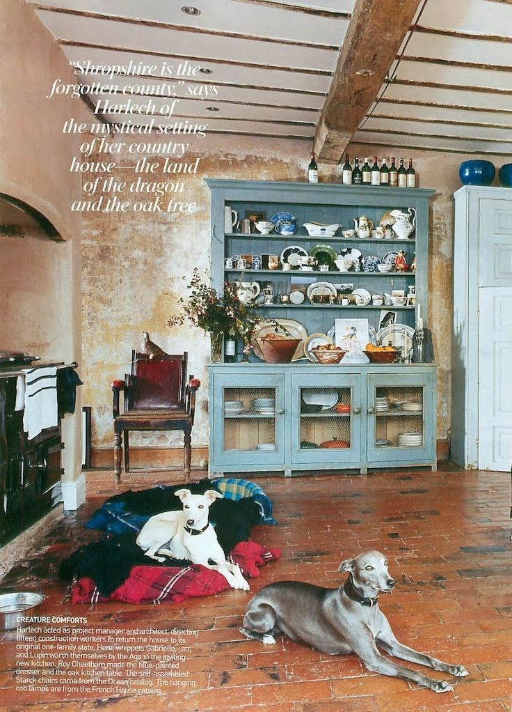 I ♥ Your Country Style: Amanda Harlech | whippets
