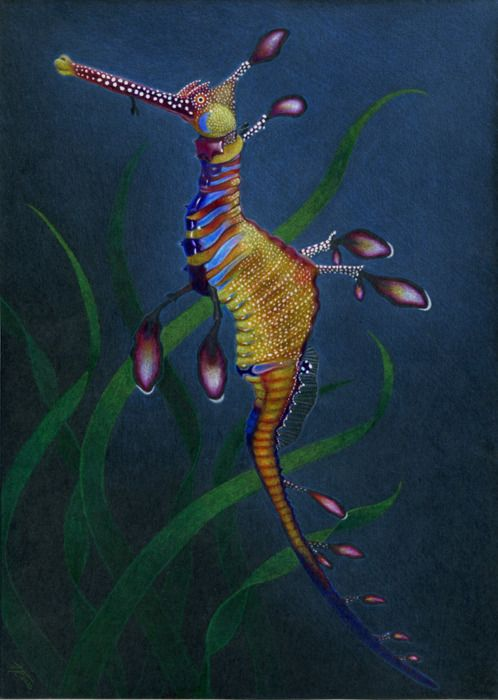 weedy sea dragon | Tumblr
