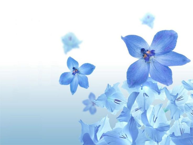 best  blue flower wallpaper ideas on   flower, Beautiful flower