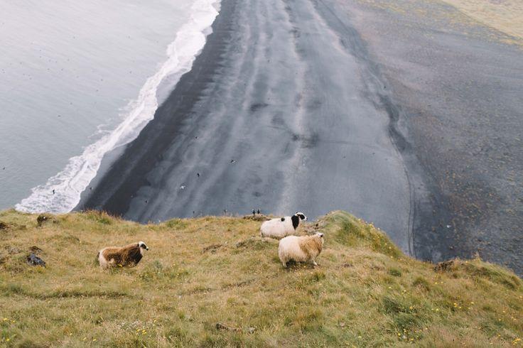 #wildlife #iceland #adventure #trip #wanderlust #nature #wilderness