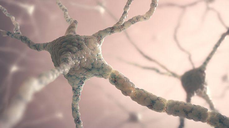 Генная терапия вылечила мышей от болезни Альцгеймера - РИА Новости
