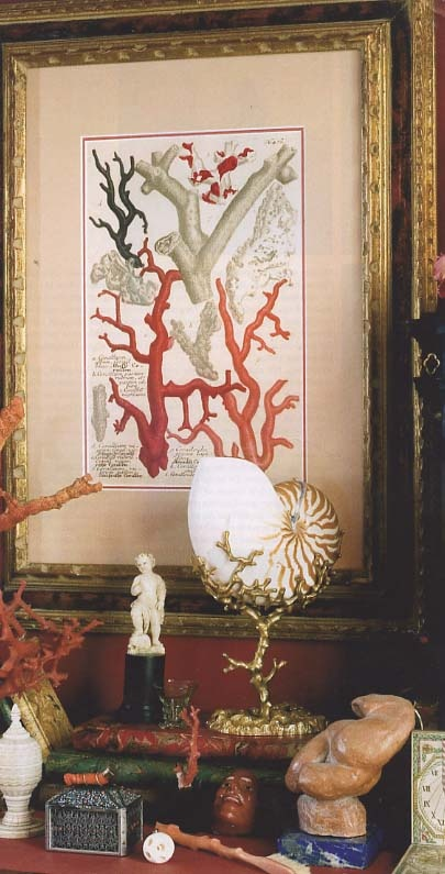 interior coral