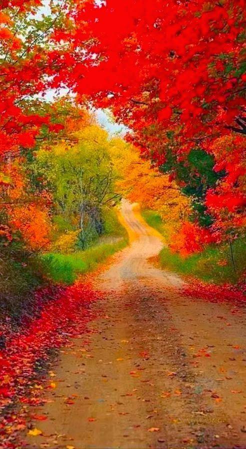 Autumn Road, Michigan ~ 4 Season World