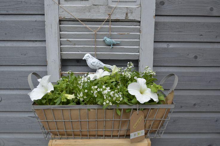 stoere draadmand, vol met zomerse bloemen!