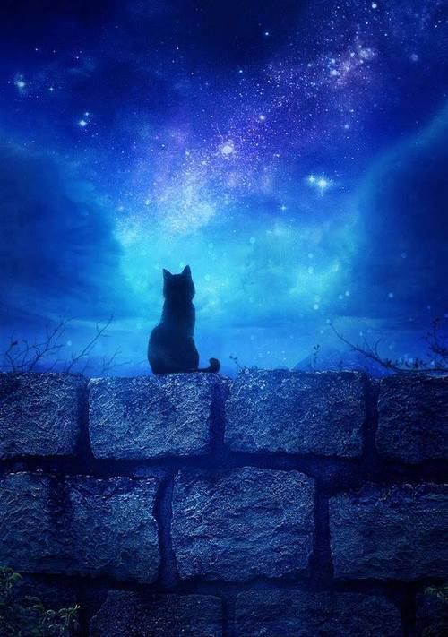 I'm so lonely without you Mom, all I can do is to talk to the stars. But they never answer back. I love you, xox ☆.。.:*・°☆.。.:*・°☆.。.:*・