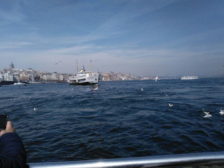 İstanbul. Deniz. martı. Ve portre