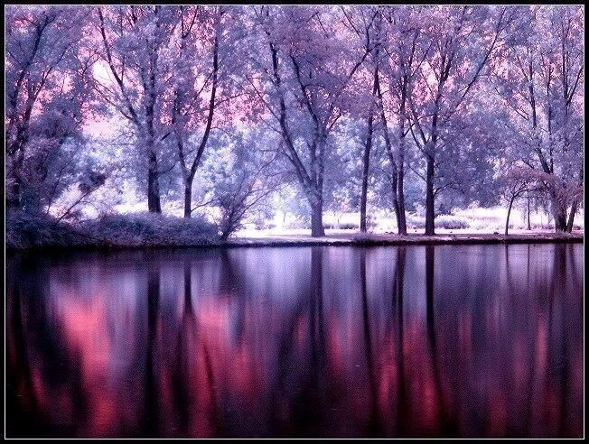 Magical Pictures 89