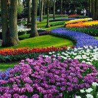 Keukenhof also known as the Garden of Europe, is the world's second largest flower garden.. coming soon!!!! :)
