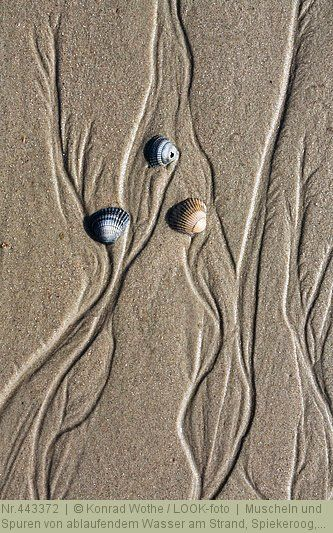 Muscheln und Spuren von ablaufendem Wasser am Strand, Spiekeroog, Ostfriesische Inseln, Nationalpark Niedersächsisches Wattenmeer, Nordsee, Ostfriesland, Niedersachsen, Deutschland, Europa