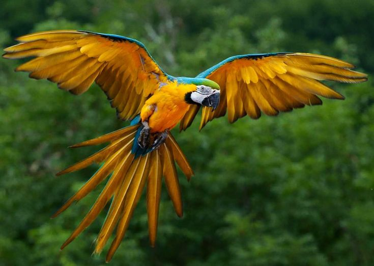 Amazon Rainforest Birds | The enda(1466  1045) http://ift.tt/2jlx7Sp