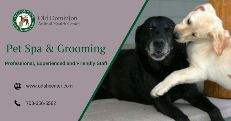 Old Dominion Animal Health Center Is Your Veterinarian In Mclean Va And Offers High Quality And Affordable Pet Spa And Pet Health Pet Spa Dog Training Near Me
