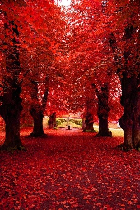 Wonderful Nature Lover The Red Flowers