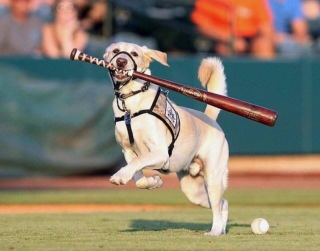 Best Dog Training Charleston Sc