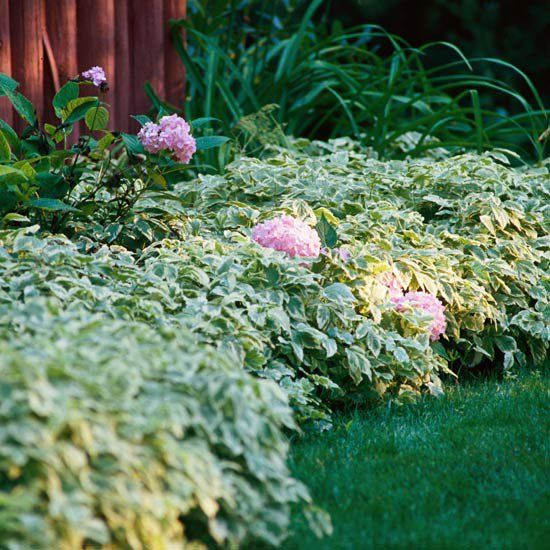 17 best images about ground cover on pinterest spreads for Landscaping ground cover plants