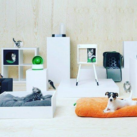 IKEA lança primeira linha de móveis e acessórios para pets | CASA CLAUDIA  A equipe de design da marca sueca trabalhou junto com veterinários para projetar peças acessíveis e esteticamente agradáveis http://crwd.fr/2xIU8Vw  http://alug.online #alugar #alug.online #alugueldecasa #anunciarimovel #apartamento #apartamentodecorado #casa #casaavenda #casanova #comprar #consultorimobiliario #corretordeimoveis #decoração #financiamentohabitacional #grandeoportunidade #homeoffice #imoveis…