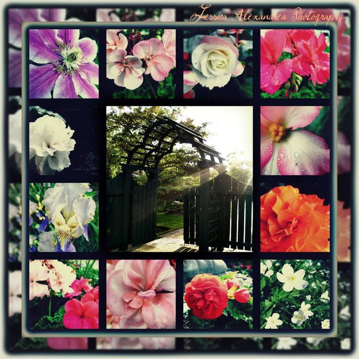 Colourful Flowers in the Rain collage