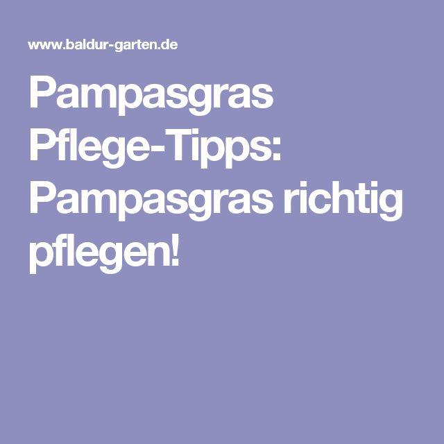 Pampasgras Pflege-Tipps: Pampasgras richtig pflegen!