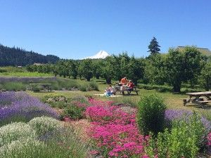 Seductive  Best Images About Hood River Lavender Farms On Pinterest  With Goodlooking Picnic Time On The Lavender Farm Picnic Onthefarm Hoodriverlavender  Organic  With Breathtaking Secret Garden Design Ideas Also Grey Gardens In Addition Kew Gardens Cinema Prices And Planning Garden Design As Well As Sunshine Garden Centre London Additionally Garden Tent Hire From Pinterestcom With   Goodlooking  Best Images About Hood River Lavender Farms On Pinterest  With Breathtaking Picnic Time On The Lavender Farm Picnic Onthefarm Hoodriverlavender  Organic  And Seductive Secret Garden Design Ideas Also Grey Gardens In Addition Kew Gardens Cinema Prices From Pinterestcom