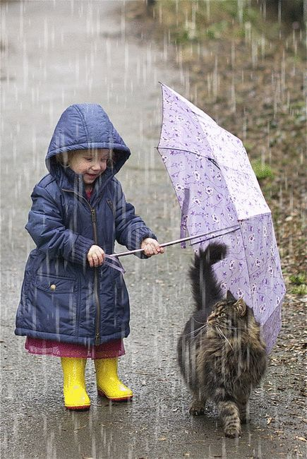 untitled ~ Rain ~ child with umbrella holding over the cat