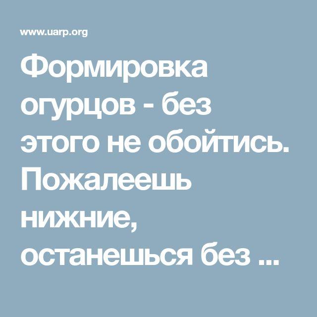Формировка огурцов - без этого не обойтись. Пожалеешь нижние, останешься без верхнего урожая!   Новости   Всеукраинская ассоциация пенсионеров