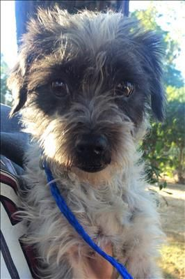 Baby is an adoptable Terrier searching for a forever family near Los Angeles, CA. Use Petfinder to find adoptable pets in your area.