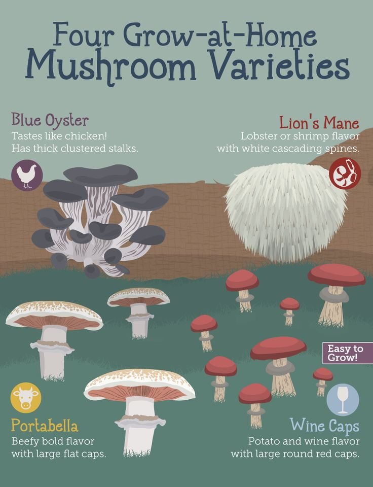 Growing Mushrooms at Home: Best Varieties to Plant