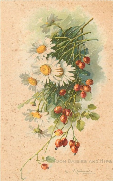 Moon daisies and rosehips by Catherine Klein.