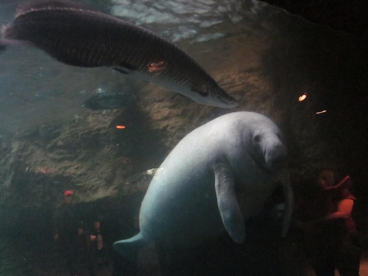 Dallas Aquarium he was so cool!