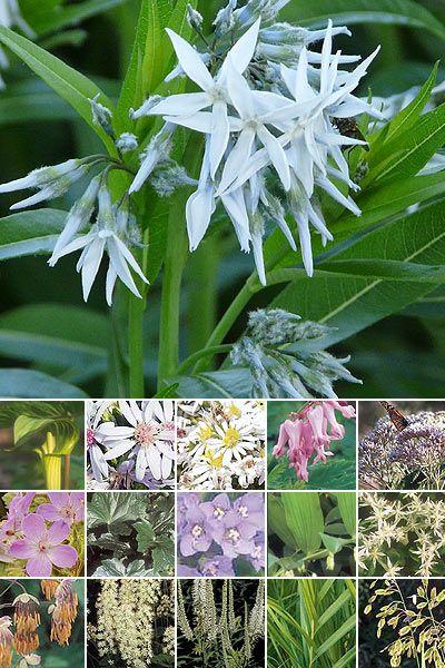 87 best native plants