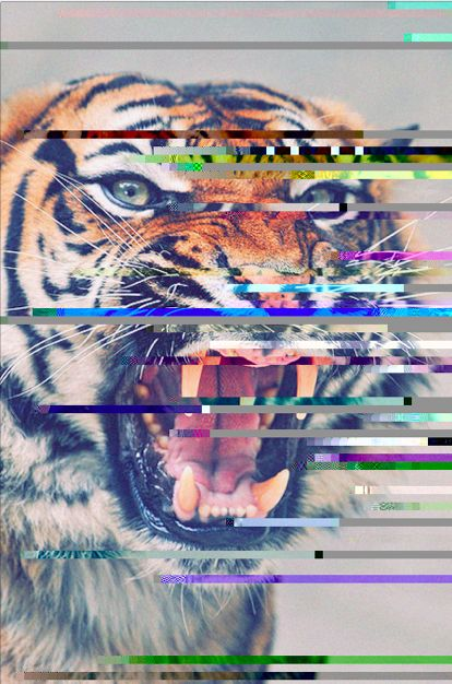 graphic tiger.