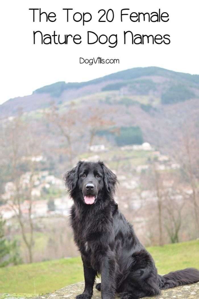The Top 20 Female Nature Dog Names Dogvills Dog Names Female Dog Names Best Female Dog Names