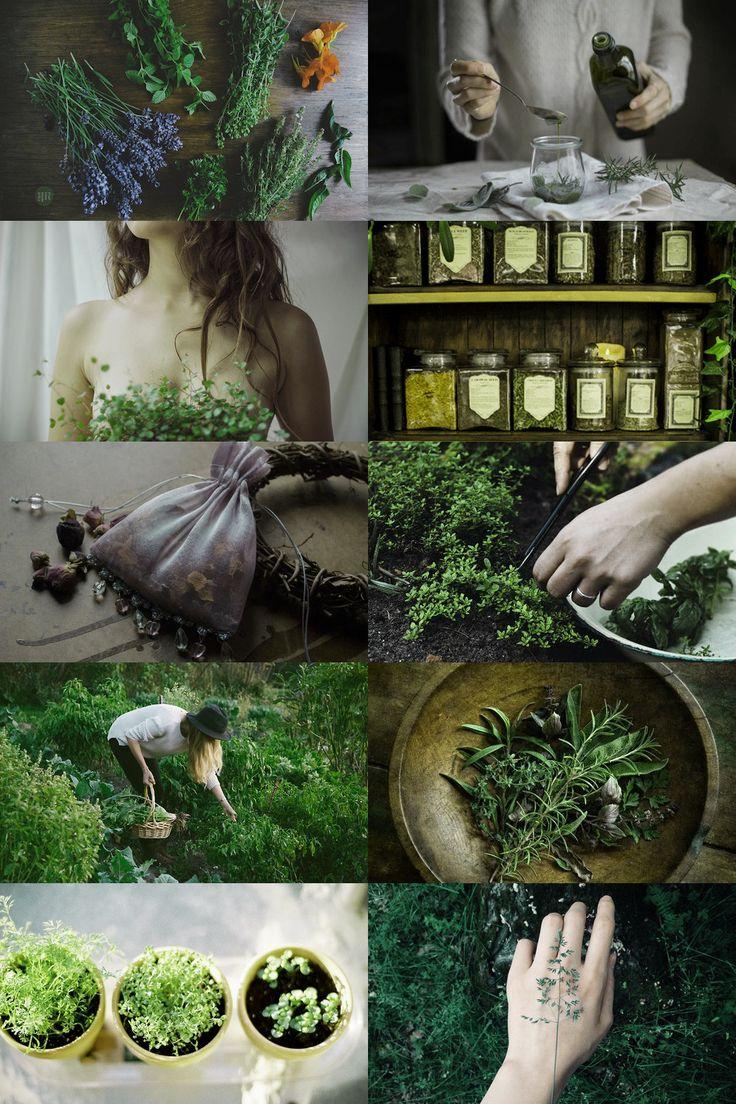 As ervas mágicas. Suas propriedades e formas de uso, elas não faltam na cozinha da bruxa.