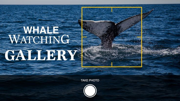 WHALE WATCHING GALLERY
