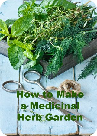 How to Start Your Own Medicinal Herb Garden