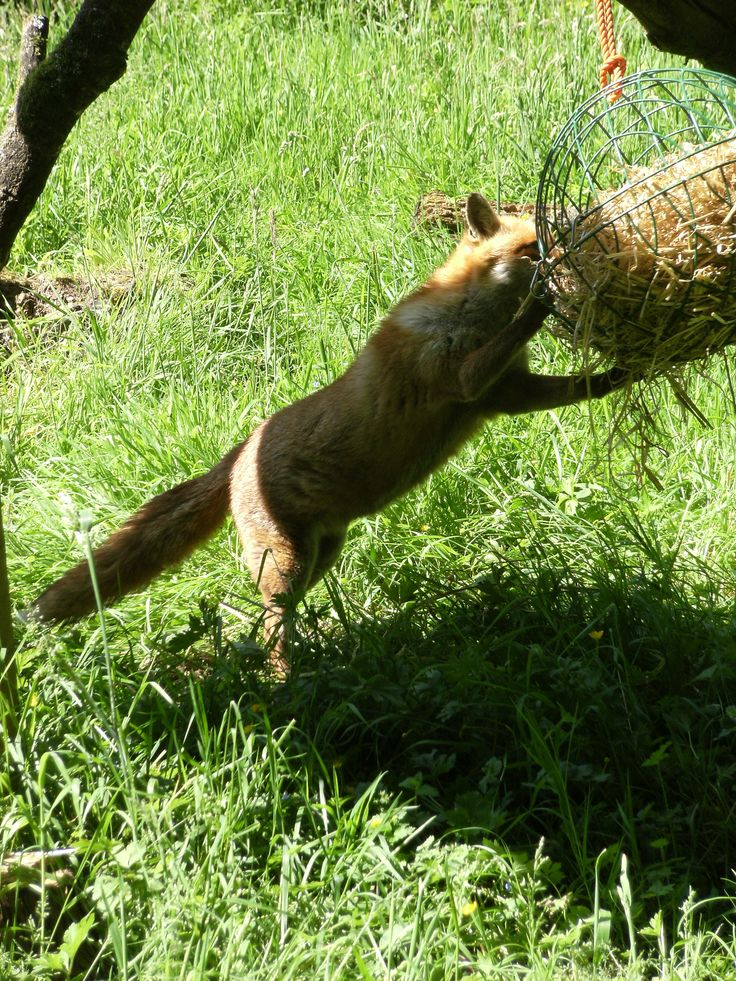 Small Animal Reptiles And Amphibian Habitats: Hanging Basket Puzzle Feeder